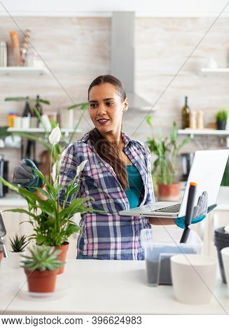 Woman Gardener Using Laptop In Home While Decorating Kitchen With Flowers. Decorative, Plants, Growi