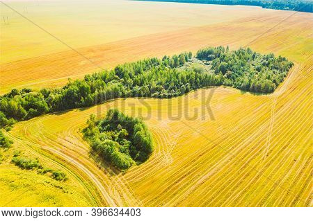 Small Green Natural Island With Green Grass, Forest In Summer Rural Field Landscape. Aerial View Of