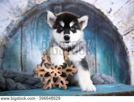 Malamute puppy holding a Christmas decorative snowflake