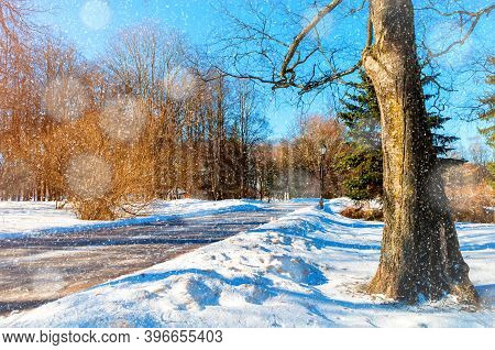 Winter landscape, winter park alley in sunny winter weather. Snowy winter park scene under light snowfall, winter park in sunny day, winter alley, sunny winter city view
