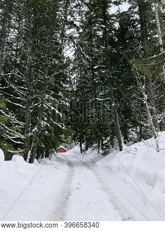 Winter Snowy Coniferous Forest In Snowfall. A Forest Road Leads To A Red Cabin. Winter Forest Landsc