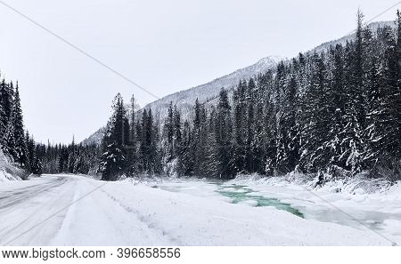 Coniferous Snowy Forest. Mountainous Cayoosh Creek With Turquoise Water Flows Between Tall Fir Trees
