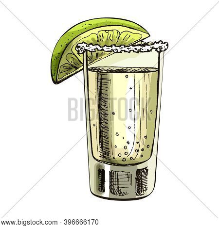 Glass Tequila With Slice Lime. Vector Vintage Hatching Color Illustration. Isolated On White Backgro