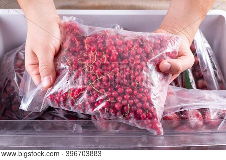 Frozen Red Currants. Frozen Berries And Fruits In A Plastic Bag In Freezer