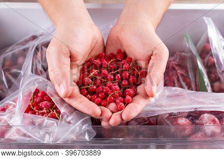 Frozen Red Currants In Hand, Closeup. Frozen Berries And Fruits In A Plastic Bag In Freezer