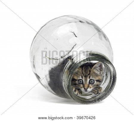 Kitten Looking Out Of A Glass Bottle