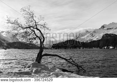An Old Tree With Dry Branches At The Water Side With Snow Mountain At The Background
