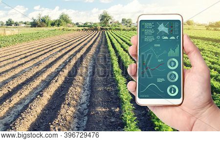 Phone With Infographics On The Background Of A Farm Field Plantation. Process Of Crop Maturation, Mo