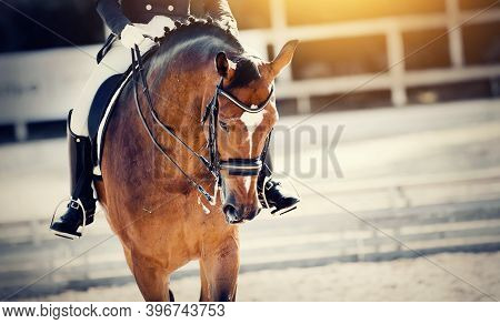 Equestrian Sport. Portrait Sports Stallion In The Bridle.the Leg Of The Rider In The Stirrup, Riding