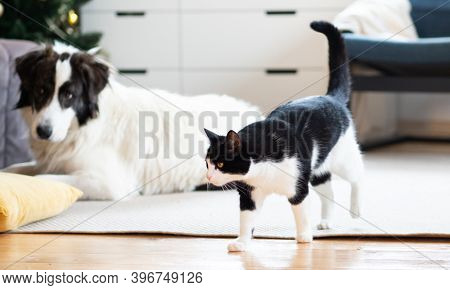 cute little cat and dog at home at Christmas hygge concept