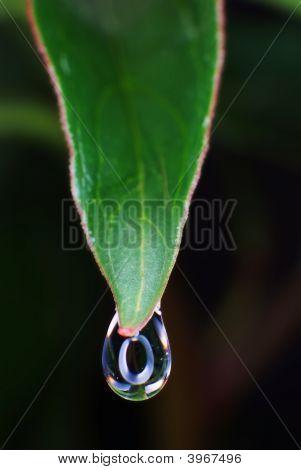 Water Droplet On Green Leaf In Macro