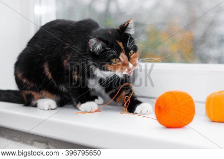 A Cat Plays With A Ball Of Thread. Pet Games. Threads For Knitting. Advertising Toys For Cats. Adver