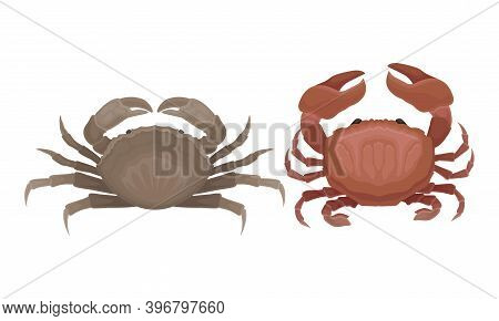 Different Crabs As Decapod Crustaceans With Claws Vector Set