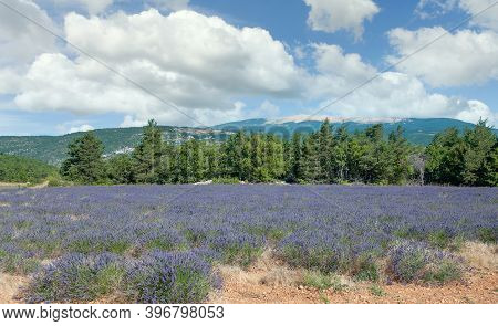 Idyllic Landscape With Famous Mont Ventoux In Background In Provence,france