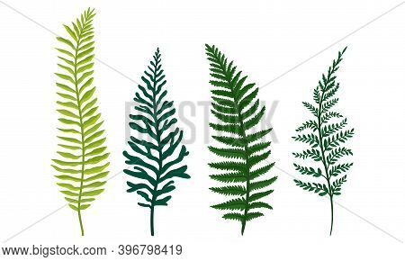 Green Fern Frond Or Branch As Tropical Foliage Vector Set