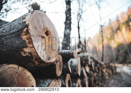 Details With Logs And Cut Down Trees In A Romanian Forest.