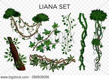 Tropical Rainforest Jungle Climbing Plants Twining Lianas Hedera Ivy Vine Realistic Elements Set Tra
