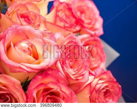 Close-up Of A Large Bouquet Of Pink Roses On A Blue Background. Bouquet Of Roses. Pink Roses. Select