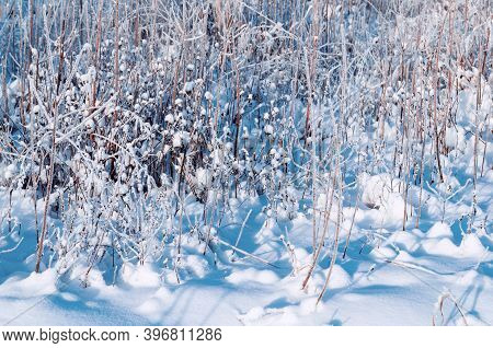 Winter snowy plants on the winter field covered with snow, winter field landscape, snowy winter plants at the snowy field