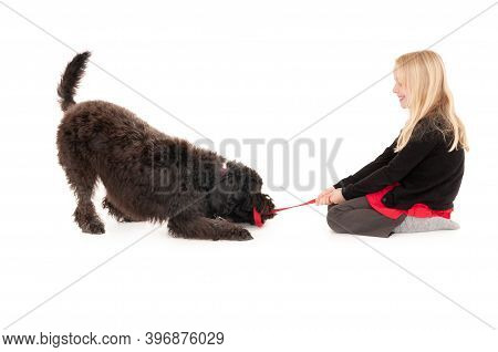 Young Blonde Girl Smiling While Playing Tug Of War With Black Labradoodle. Isolated On White Studio