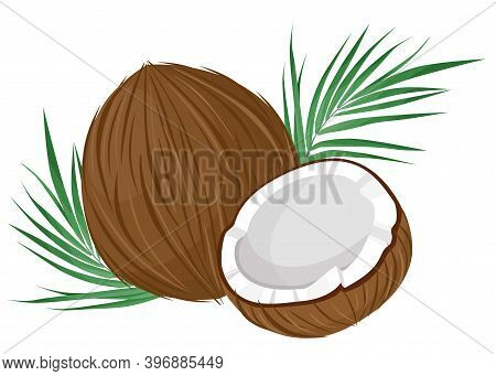 Whole And Half Coconut Isolated On White Background. Palm Leaves.