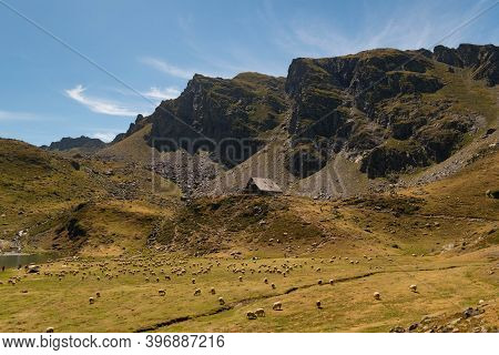 Sheep Grazing Scattered Across The Pastures Next To The Ayous Refuge With Mountains In The Backgroun