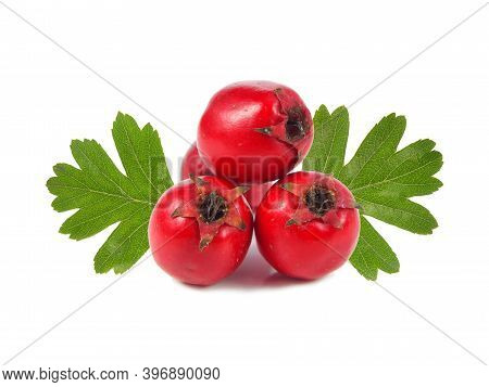 Hawthorn Berries And Green Leaves Isolated On White Background