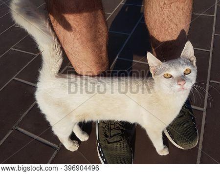 Cat Rubbing Against Male Legs Outdoor Sunlight