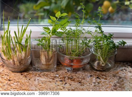 Glass Dishes With Herbs And Plants Growing In Indoor Water Garden At Granite Kitchen Counter Near Wi