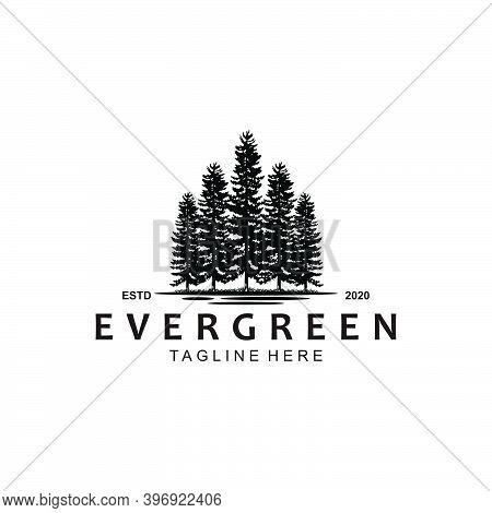 Icon Symbol  Template Evergreen Logo Design Inspiration
