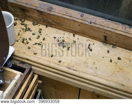 Indoor Closeup Of Many Dead Bees On The Window Sill