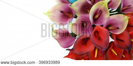 Bouquet with purple and red calla lilies on a white background
