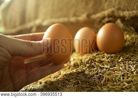 Man's Hand Picking An Egg From Husk For Cooking. Golden Light Photo.