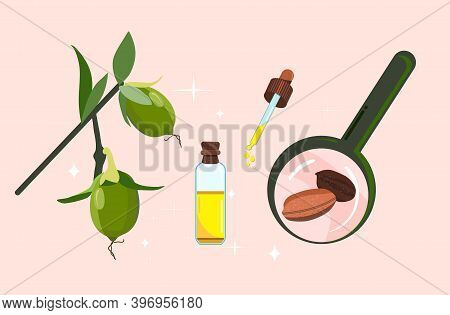 Jojoba Oil,seeds And Leaves With Magnifier.plant Extract For Cosmetology.elixir Or Serum,lotion For