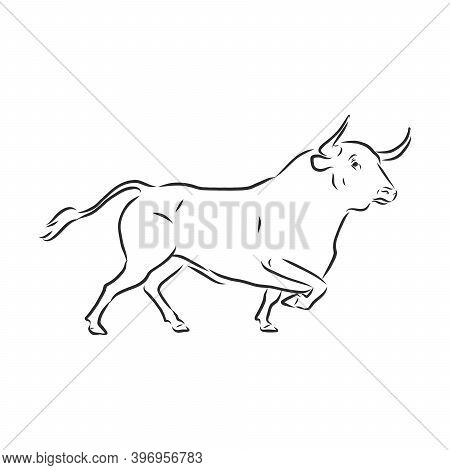 Black And White Linear Paint Draw Bull Vector Illustration. Bull Vector Sketch Illustration