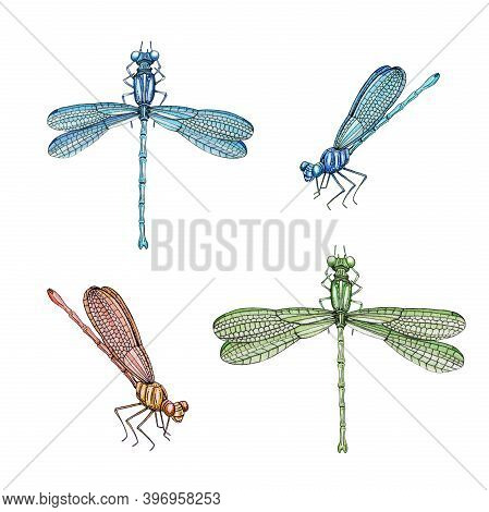 Dragonfly Set Watercolor Illustration. Hand Drawn Damsefly Side And Top View Elements Collection. Br