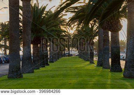 Morro Jable, Fuerteventura, Spain: 2020 October 08: Park In The Time Of Covid 19 Morro Jable On The