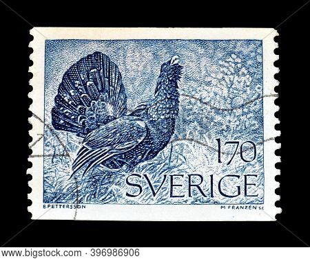 Sweden - Circa 1975 : Cancelled Postage Stamp Printed By Sweden, That Shows Western Capercaillie (te