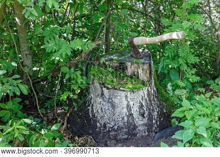 Ax In The Stump. An Iron Ax With A Wooden Handle Stuck Into A Birch Stump.