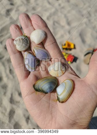 Seashells In The Palm Of Your Hand. Various Seashells In The Palm