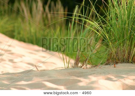 Dune Grass Up Close