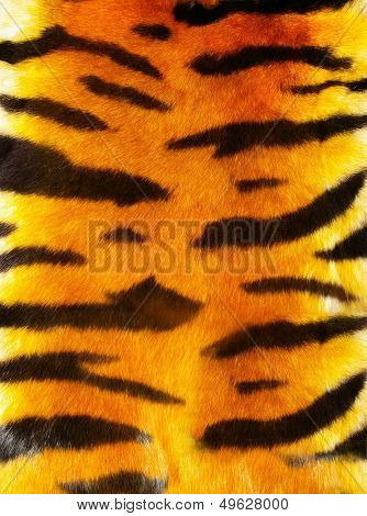 great tiger fur texture