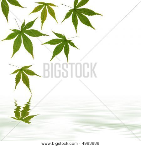 Maple leaf abstract design with reflection in rippled grey water over white background. poster