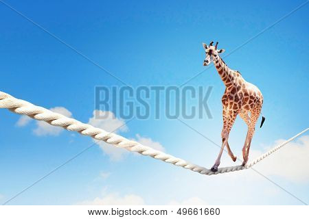 Image of giraffe walking on rope high in sky