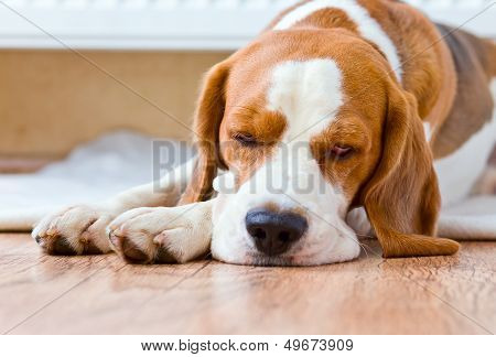 The dog has a rest on wooden to a floor near to a warm radiator poster