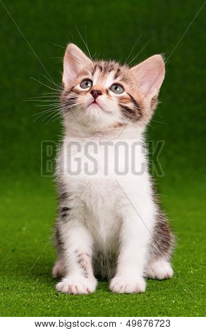 Cute little kitten on artificial green grass poster