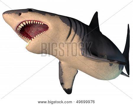 Megalodon Shark On White
