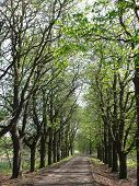 Horse chestnut alley in warm march afternoon poster