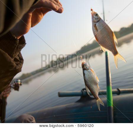 Successful Morning - Fish Bites Good