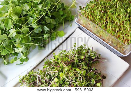 Assortment Of Microgreens